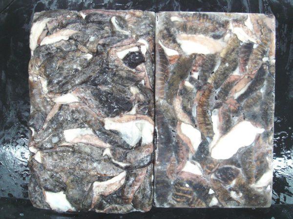 cuttlefish skin frozen
