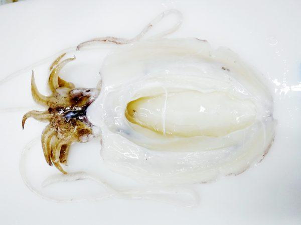 cuttlefish frozen