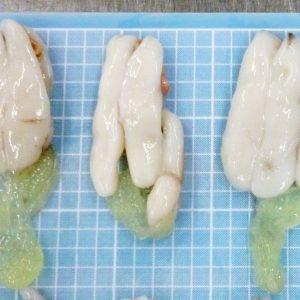 Soft Cuttlefish roe frozen