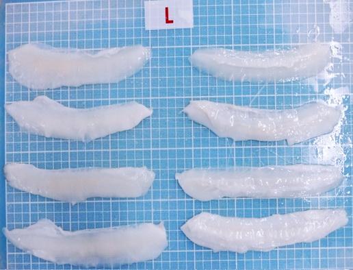 cuttlefish Wing frozen