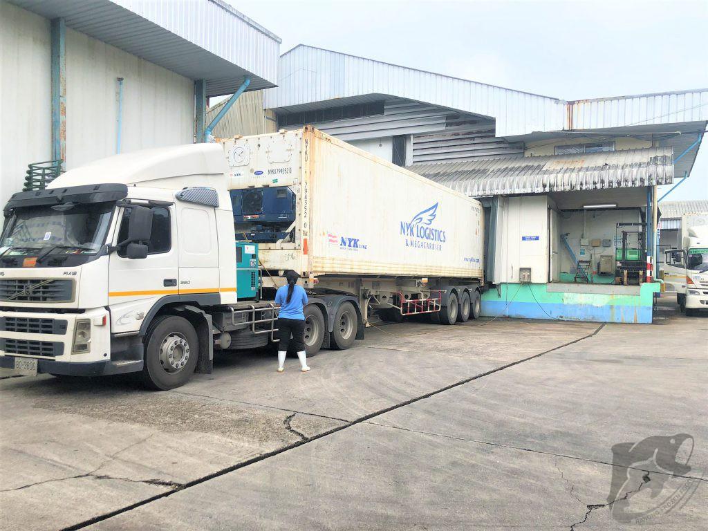 frozen logistic