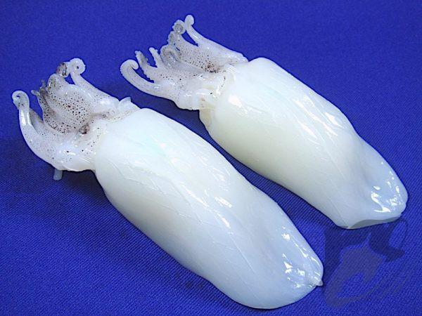 Frozen Squid Sugata